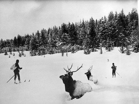 Skiers and Elk, Frank J. Haynes